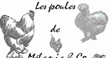 LES POULES DE MELANIE & CO